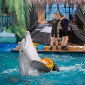 Дельфинарии, океанариумы Дубровки