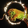 Цирки в Дубровке