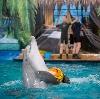Дельфинарии, океанариумы в Дубровке